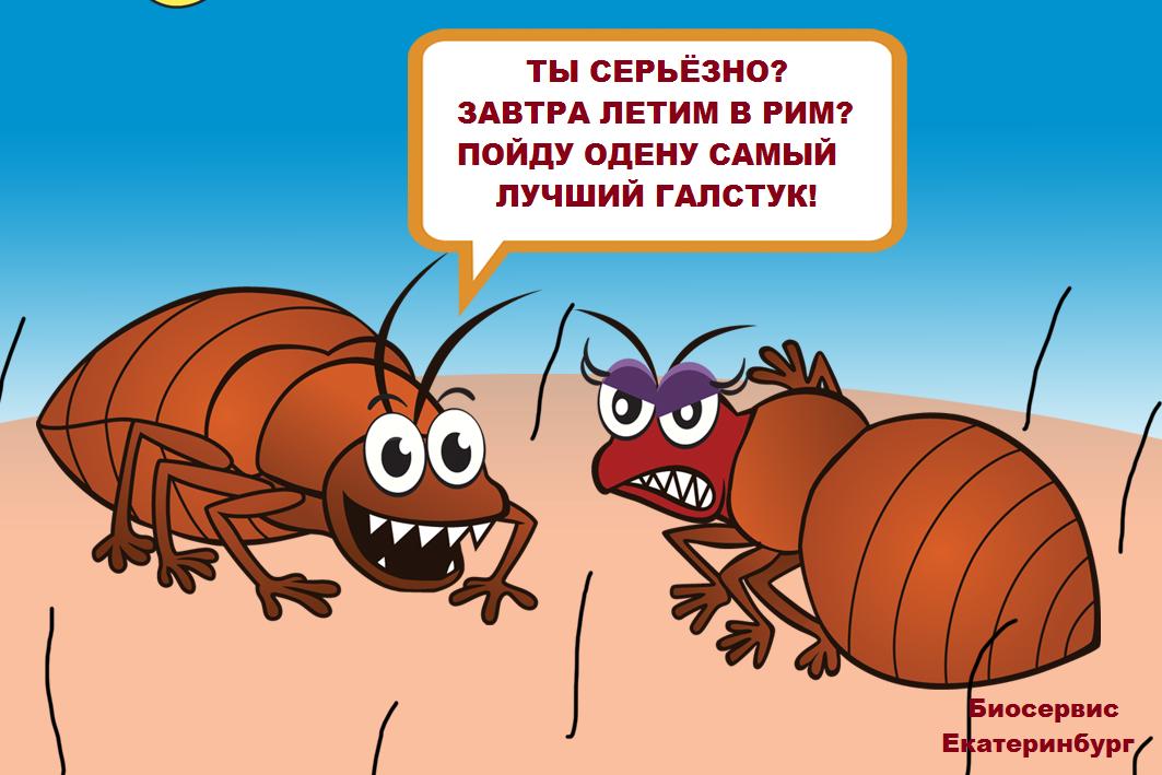 Насекомые-паразиты часто путешествуют вместе с хозяевами