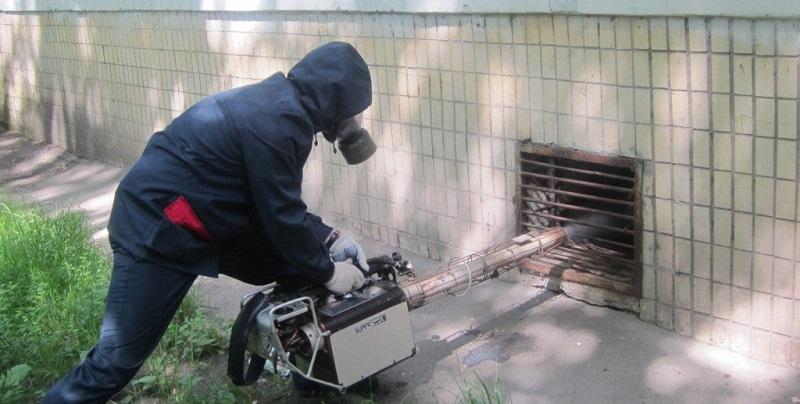 Обработка цокольного этажа от крыс и мышей