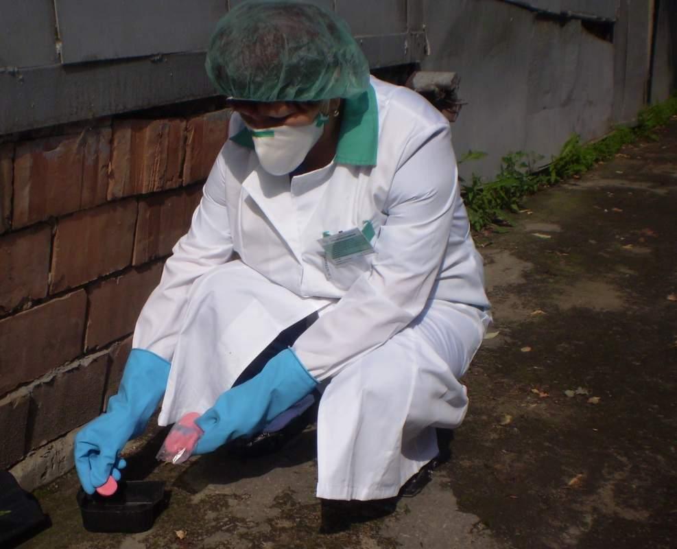 Использование приманок с отравой в дератизации