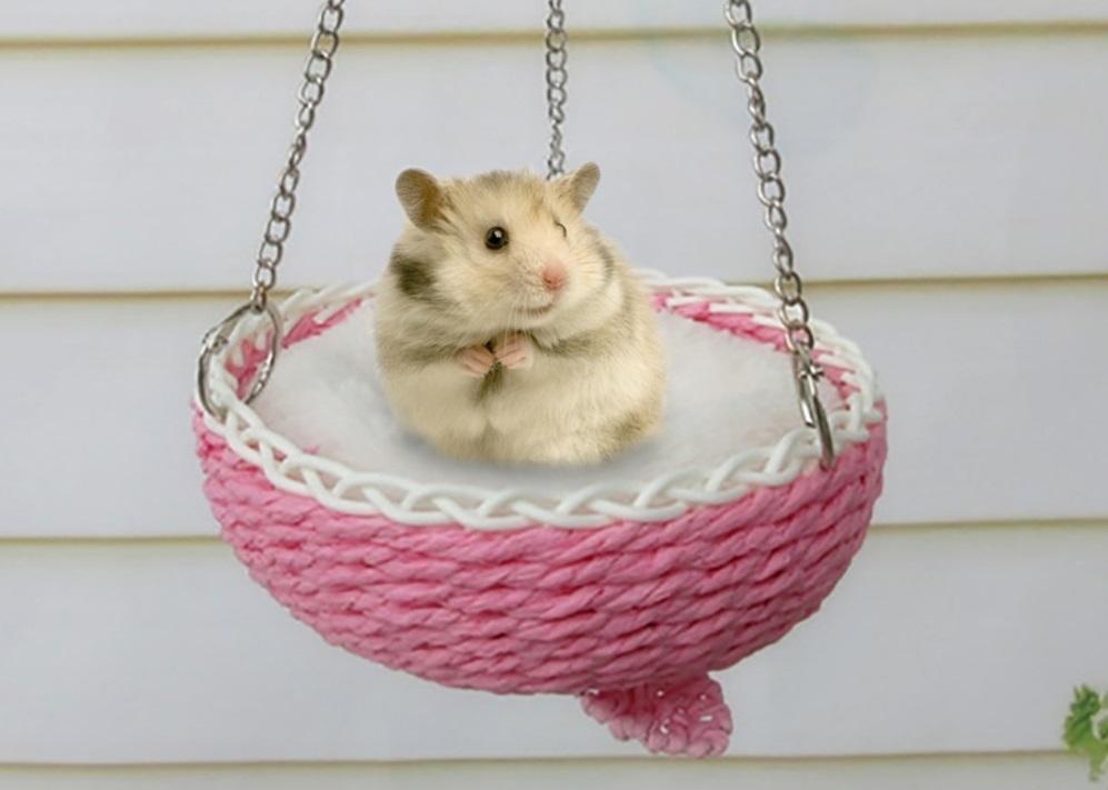 40 интересных фактов о крысах