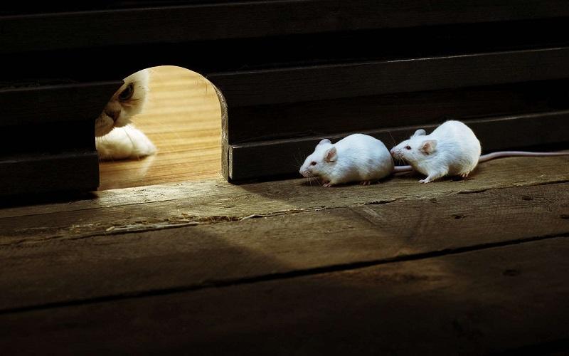 Мышки около норки