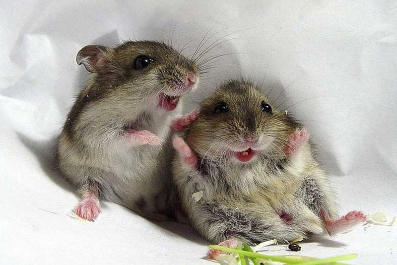 Мыши - трусливые вредители