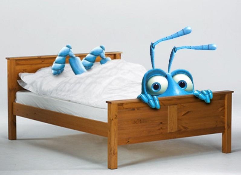 При низких температурах постельные клопы впадают в анабиоз