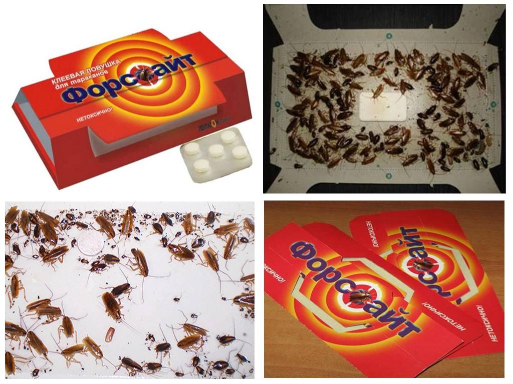 Ловушка для тараканов в действии