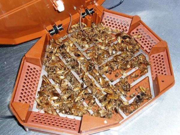 Электрическая ловушка с погибшими тараканами