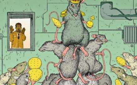 Крысы - социальные животные