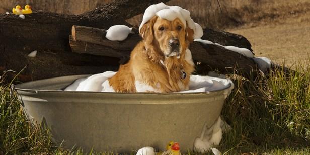 Вы можете помыть своего любимца, но в помещении останутся блохи