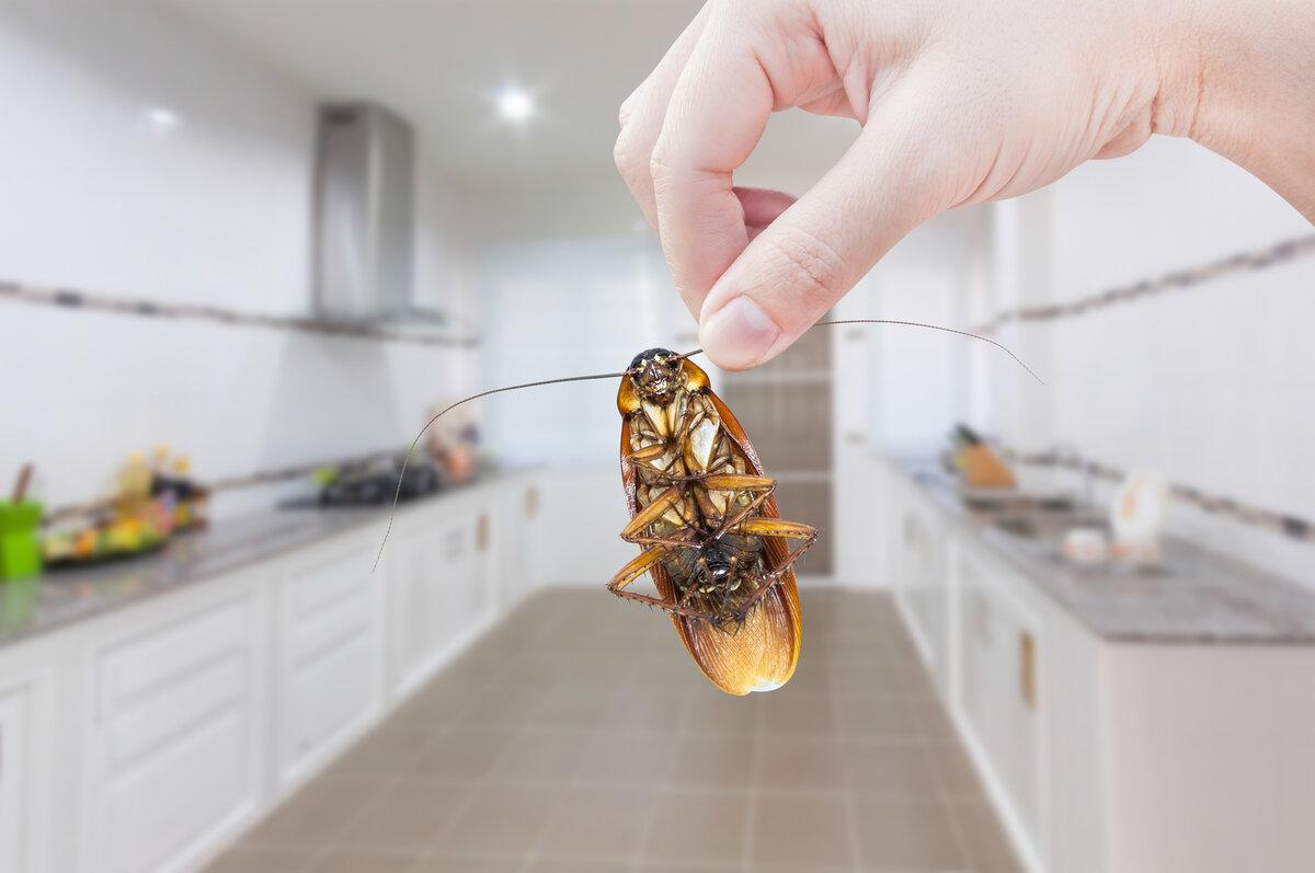 Тараканы в ресторане