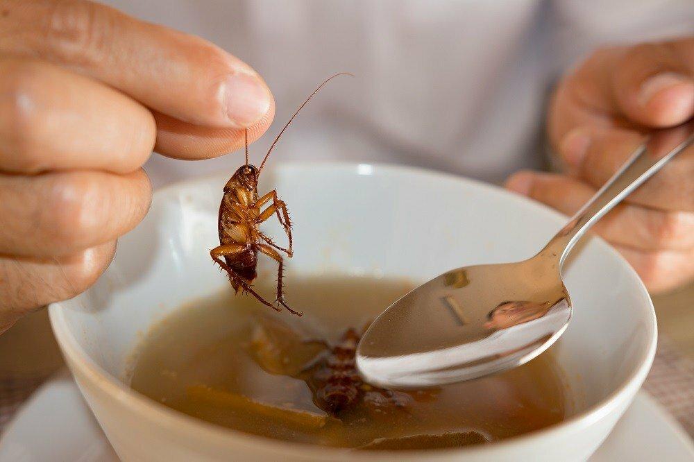 Тараканы в общепите