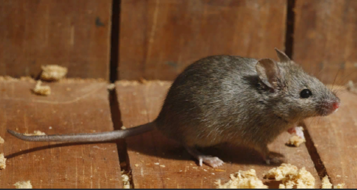 вывести мышь Екатеринбург